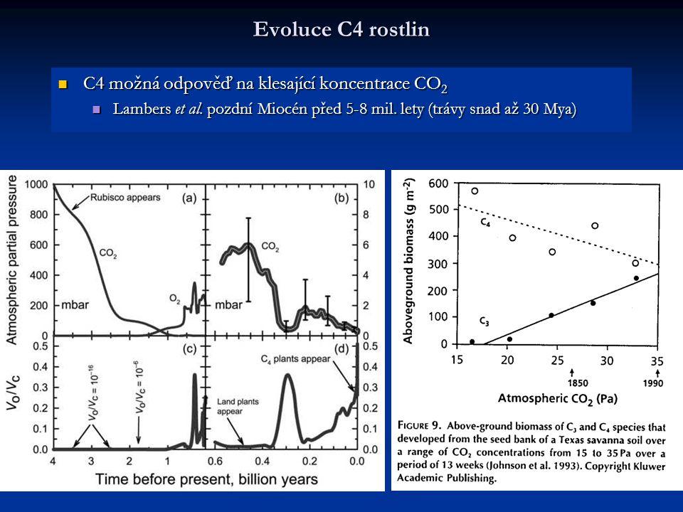 Evoluce C4 rostlin C4 možná odpověď na klesající koncentrace CO2