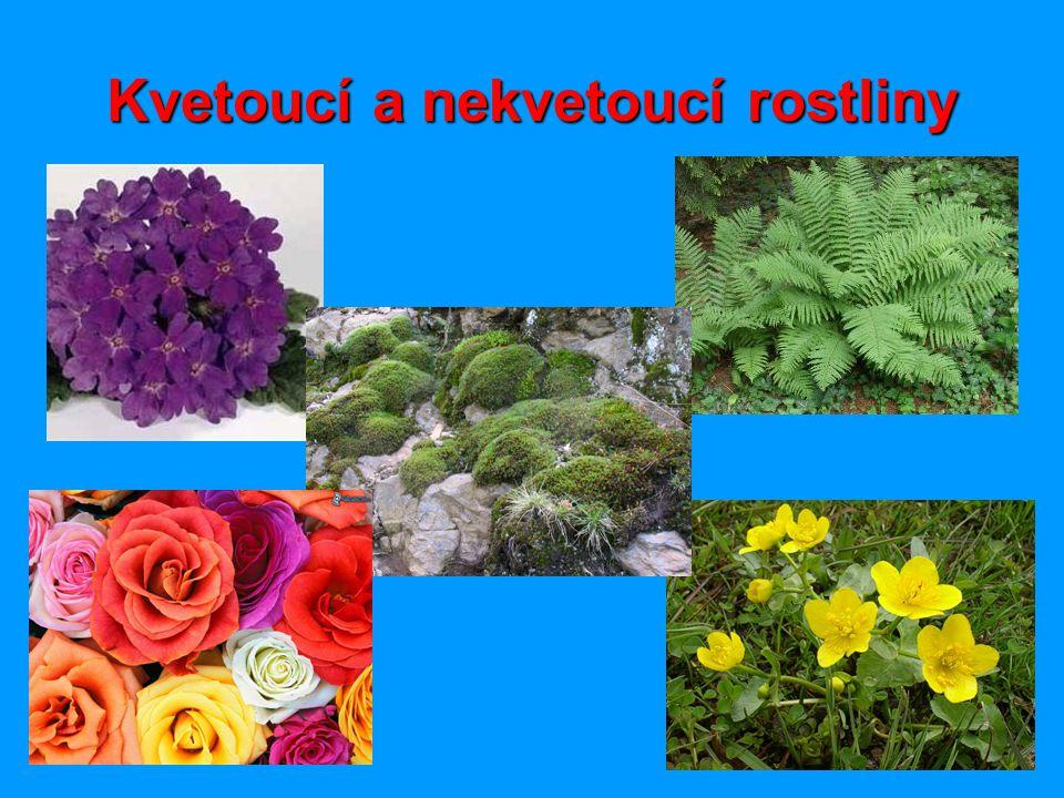 Kvetoucí a nekvetoucí rostliny