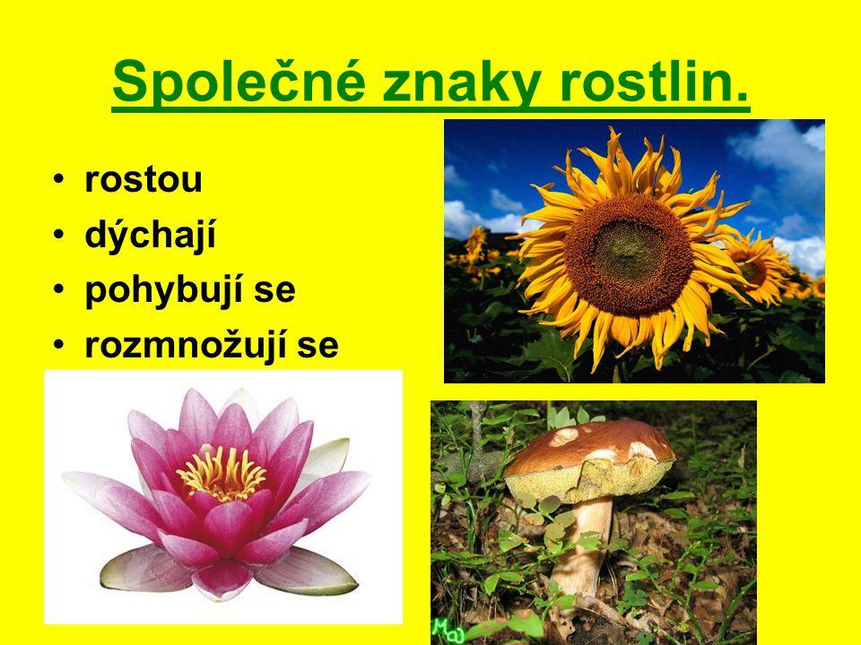 Společné znaky rostlin.