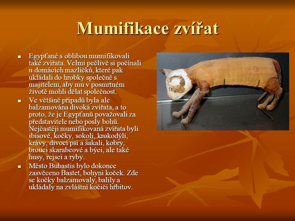 Mumifikace zvířat