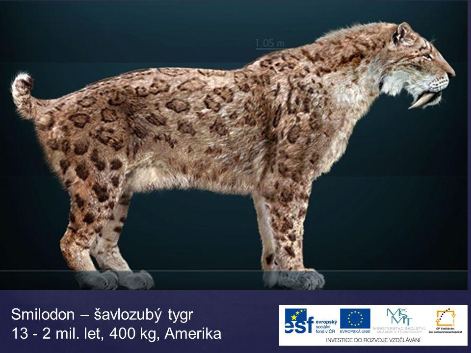 Smilodon – šavlozubý tygr 13 - 2 mil. let, 400 kg, Amerika