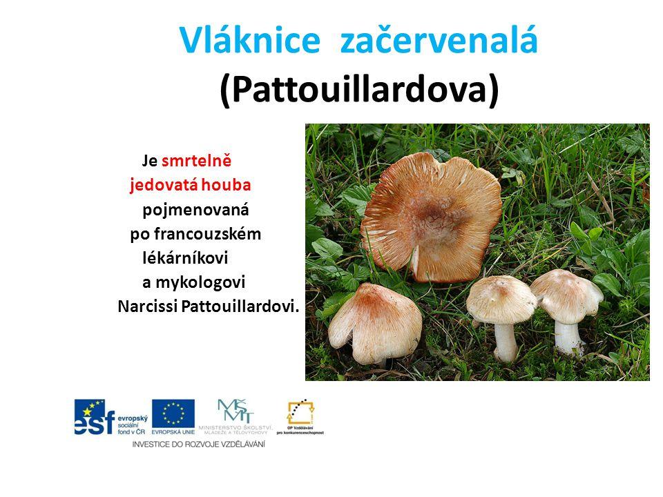 Vláknice začervenalá (Pattouillardova)