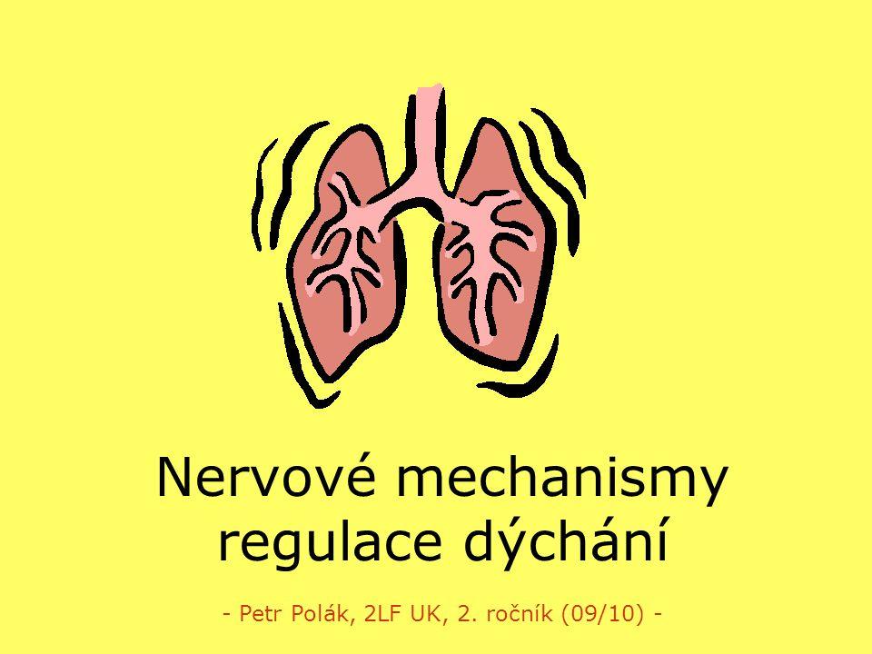 Nervové mechanismy regulace dýchání
