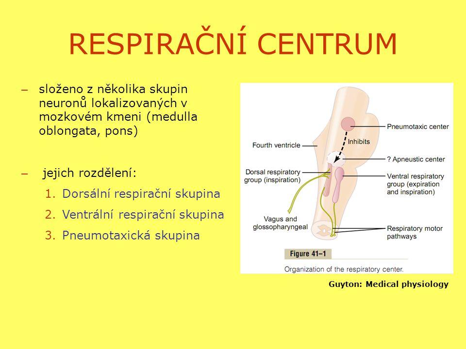 RESPIRAČNÍ CENTRUM složeno z několika skupin neuronů lokalizovaných v mozkovém kmeni (medulla oblongata, pons)