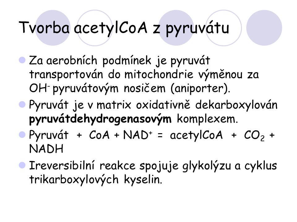 Tvorba acetylCoA z pyruvátu