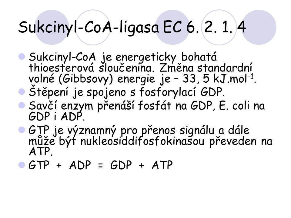 Sukcinyl-CoA-ligasa EC 6. 2. 1. 4