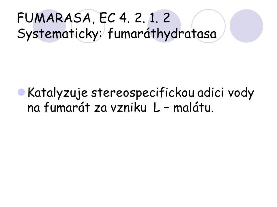 FUMARASA, EC 4. 2. 1. 2 Systematicky: fumaráthydratasa