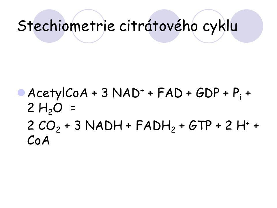 Stechiometrie citrátového cyklu