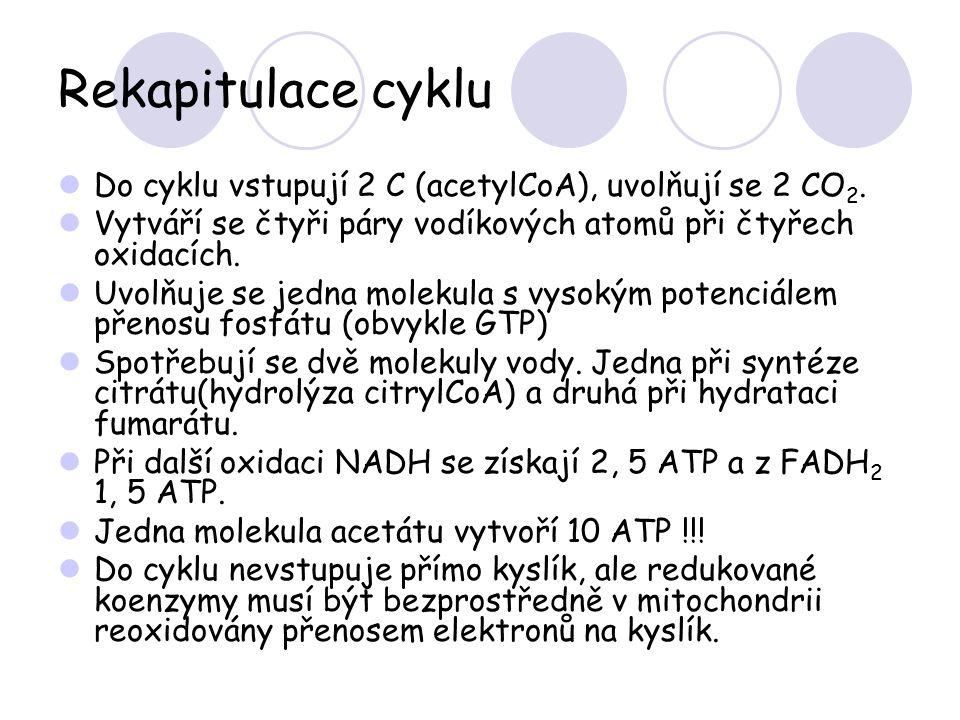 Rekapitulace cyklu Do cyklu vstupují 2 C (acetylCoA), uvolňují se 2 CO2. Vytváří se čtyři páry vodíkových atomů při čtyřech oxidacích.