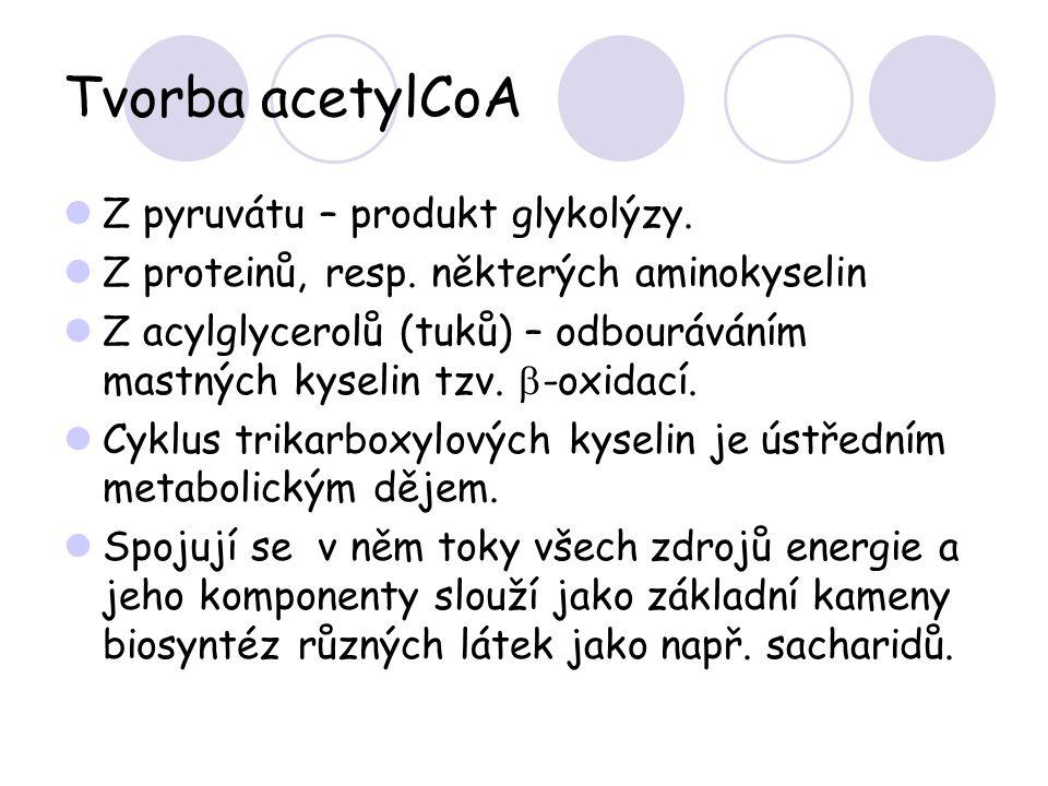 Tvorba acetylCoA Z pyruvátu – produkt glykolýzy.