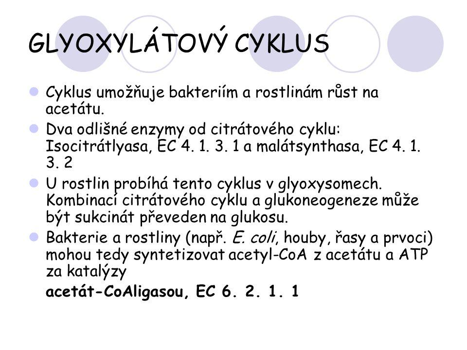 GLYOXYLÁTOVÝ CYKLUS Cyklus umožňuje bakteriím a rostlinám růst na acetátu.