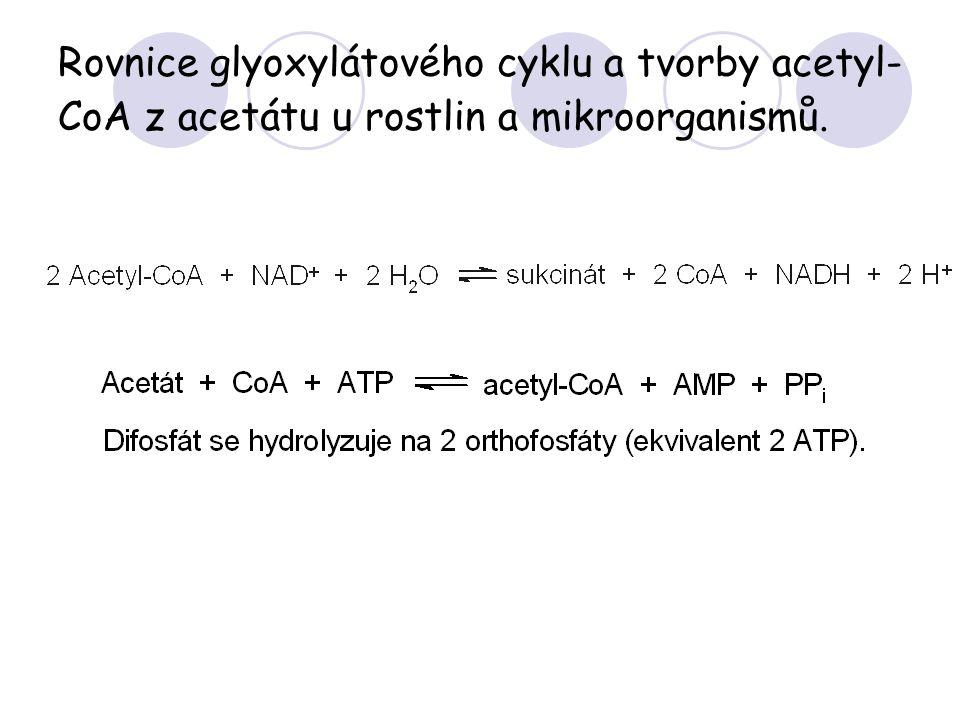 Rovnice glyoxylátového cyklu a tvorby acetyl-CoA z acetátu u rostlin a mikroorganismů.