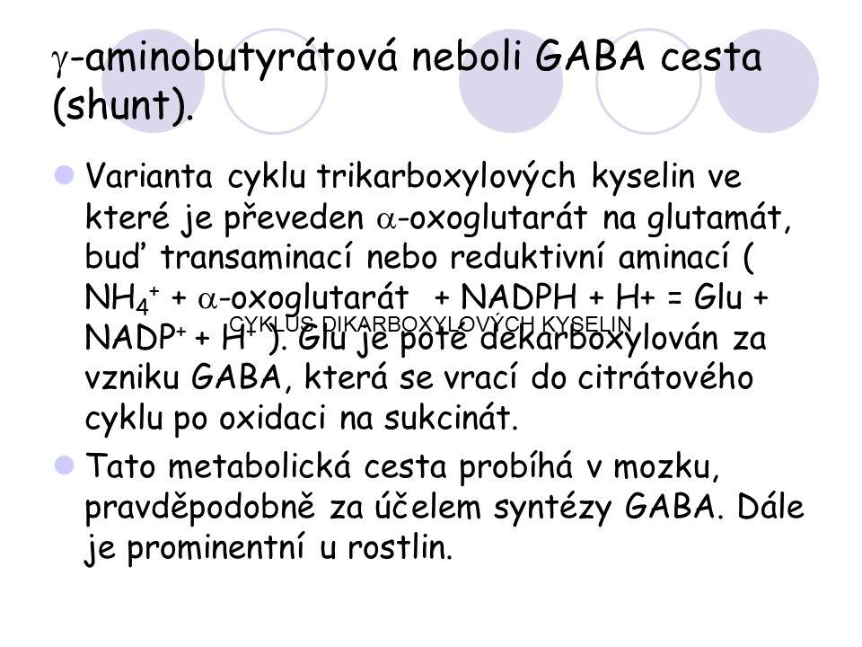 g-aminobutyrátová neboli GABA cesta (shunt).