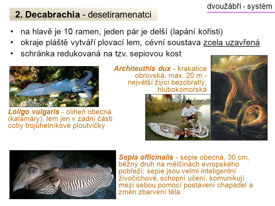 2. Decabrachia - desetiramenatci