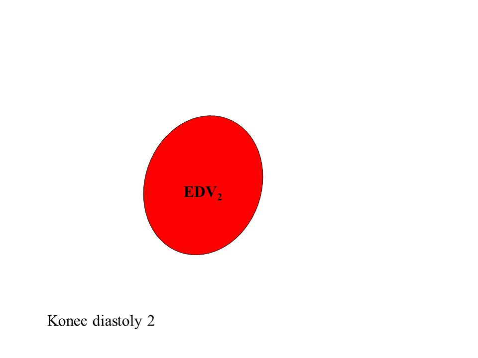 EDV2 Konec diastoly 2