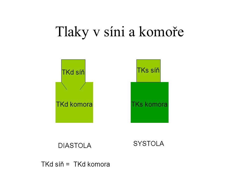 Tlaky v síni a komoře TKs síň TKd síň TKd komora TKs komora SYSTOLA