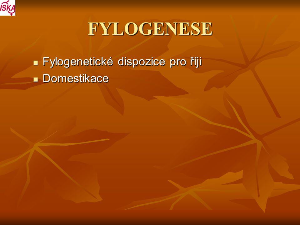FYLOGENESE Fylogenetické dispozice pro říji Domestikace