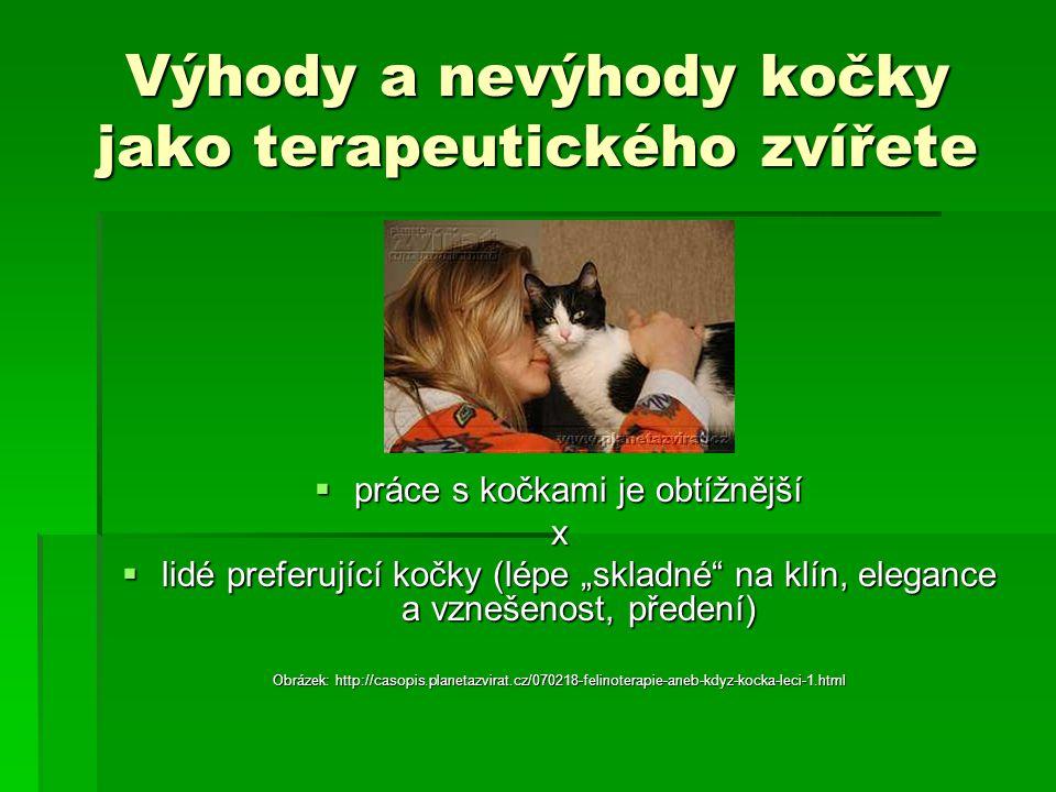 Výhody a nevýhody kočky jako terapeutického zvířete