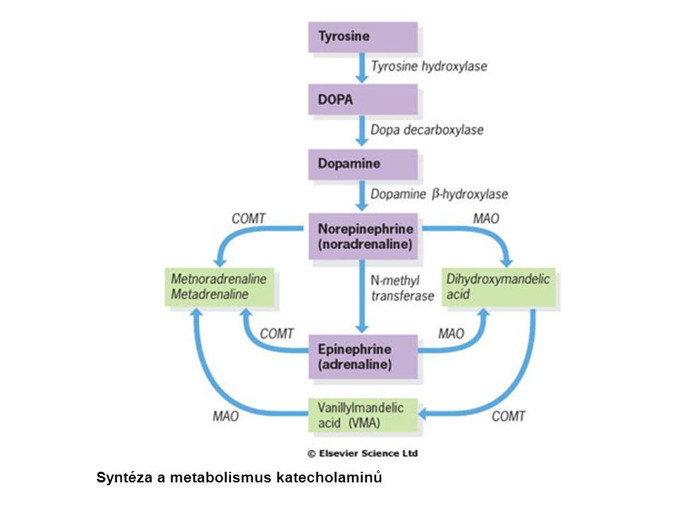 Syntéza a metabolismus katecholaminů