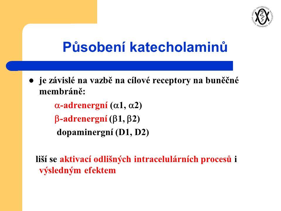 Působení katecholaminů