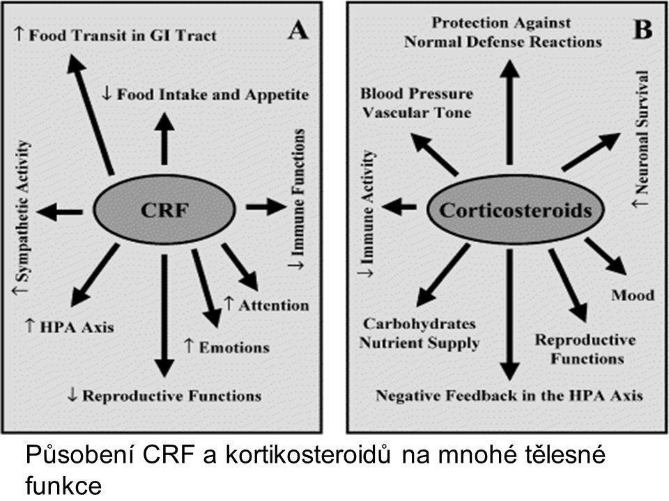 Působení CRF a kortikosteroidů na mnohé tělesné funkce