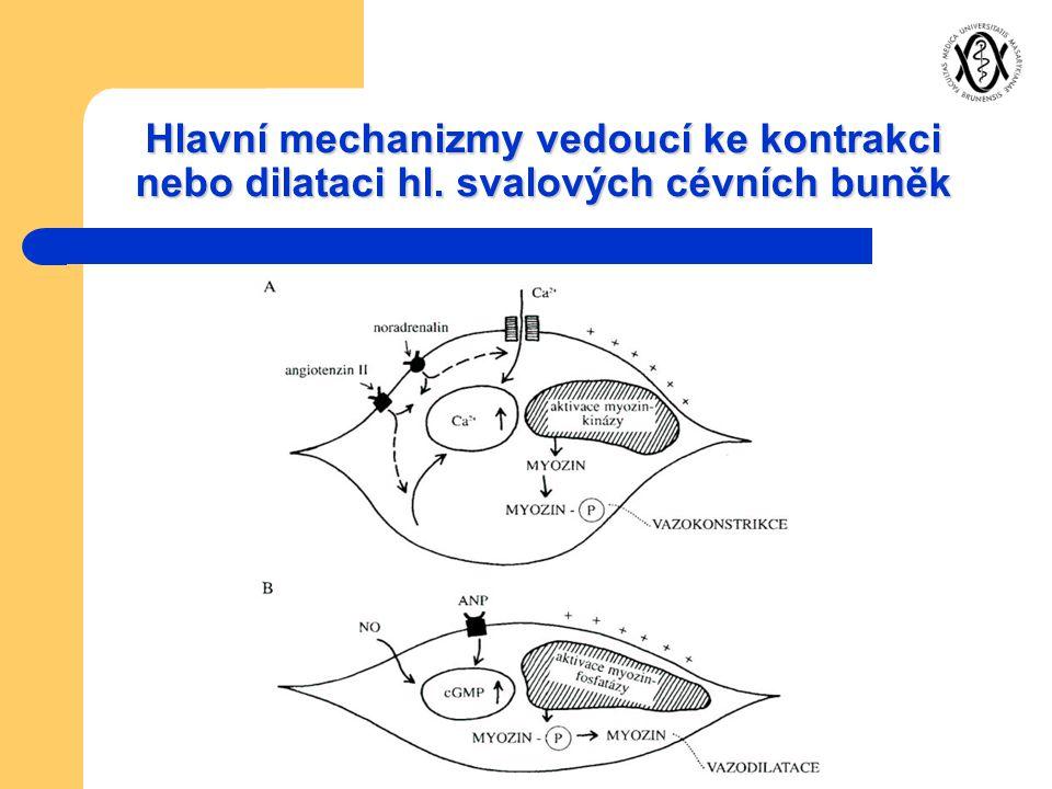 Hlavní mechanizmy vedoucí ke kontrakci nebo dilataci hl