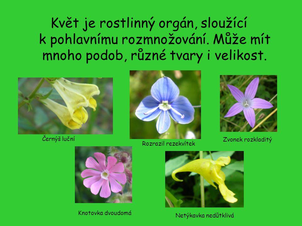Květ je rostlinný orgán, sloužící k pohlavnímu rozmnožování