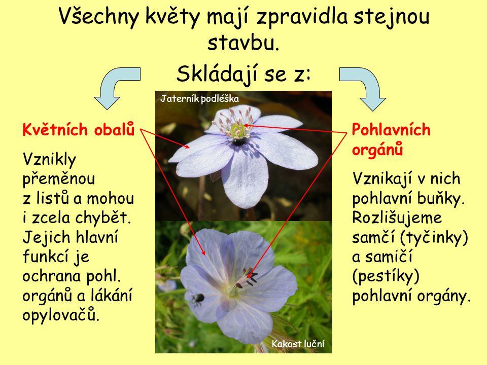 Všechny květy mají zpravidla stejnou stavbu. Skládají se z: