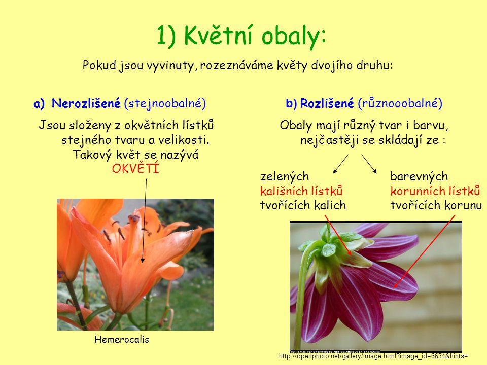 1) Květní obaly: Pokud jsou vyvinuty, rozeznáváme květy dvojího druhu: