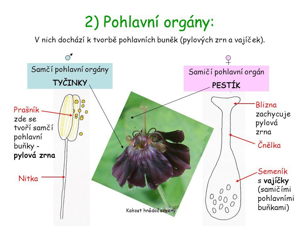 V nich dochází k tvorbě pohlavních buněk (pylových zrn a vajíček).