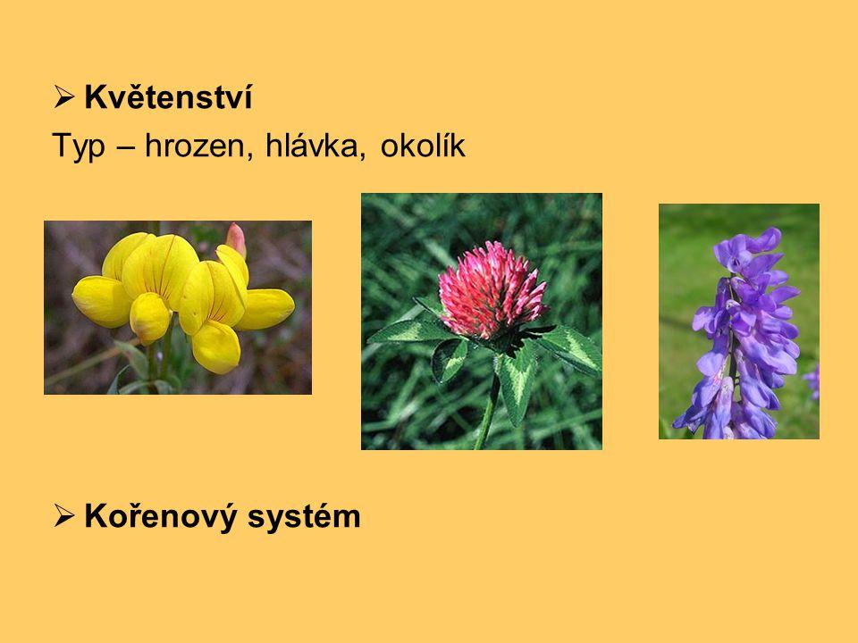 Květenství Typ – hrozen, hlávka, okolík Kořenový systém