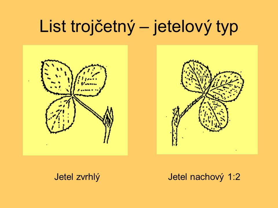 List trojčetný – jetelový typ