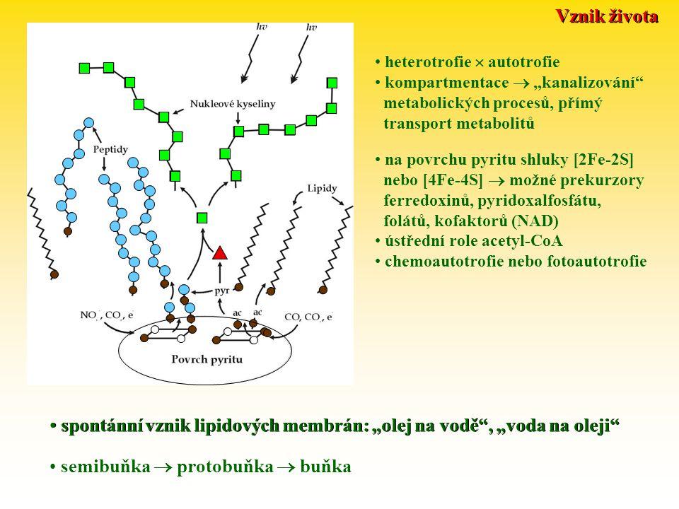 """spontánní vznik lipidových membrán: """"olej na vodě , """"voda na oleji"""