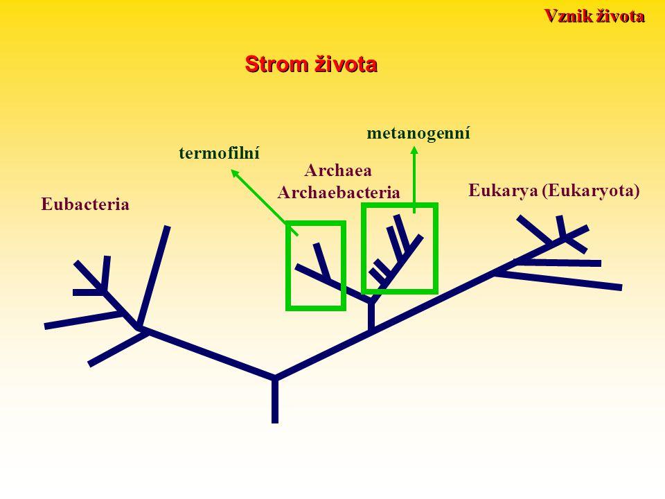 Strom života Vznik života metanogenní termofilní Archaea