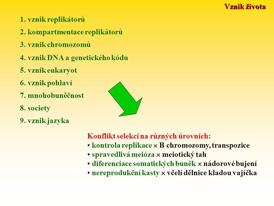 Vznik života 1. vznik replikátorů. 2. kompartmentace replikátorů. 3. vznik chromozomů. 4. vznik DNA a genetického kódu.