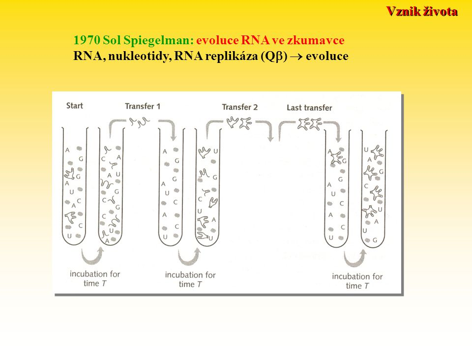 Vznik života 1970 Sol Spiegelman: evoluce RNA ve zkumavce.