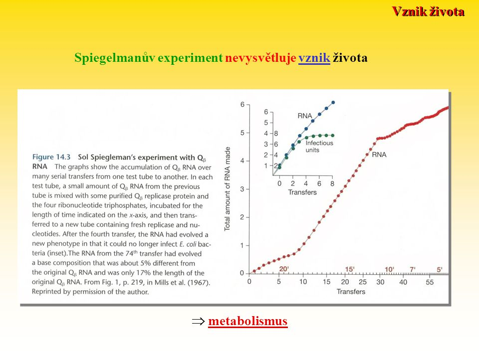 Vznik života Spiegelmanův experiment nevysvětluje vznik života  metabolismus