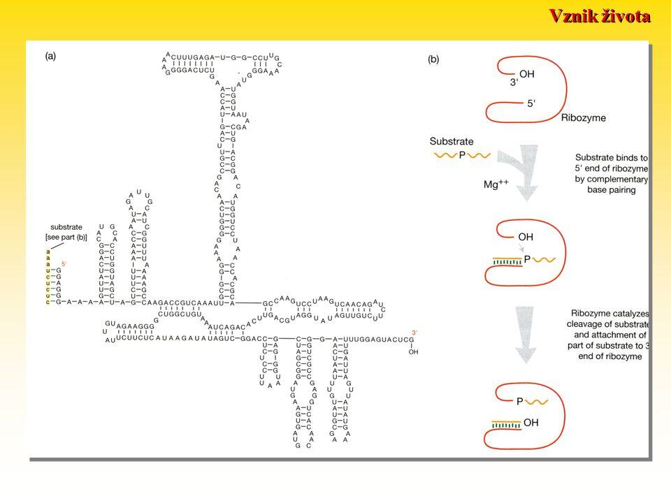 RNA jako enzym: Vznik života