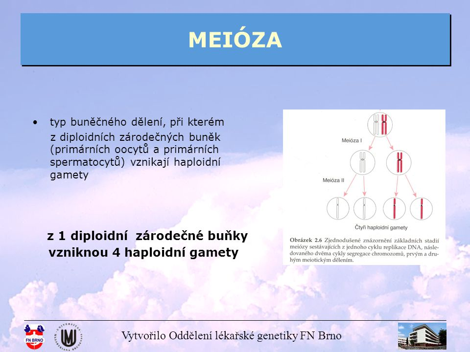 MEIÓZA vzniknou 4 haploidní gamety typ buněčného dělení, při kterém