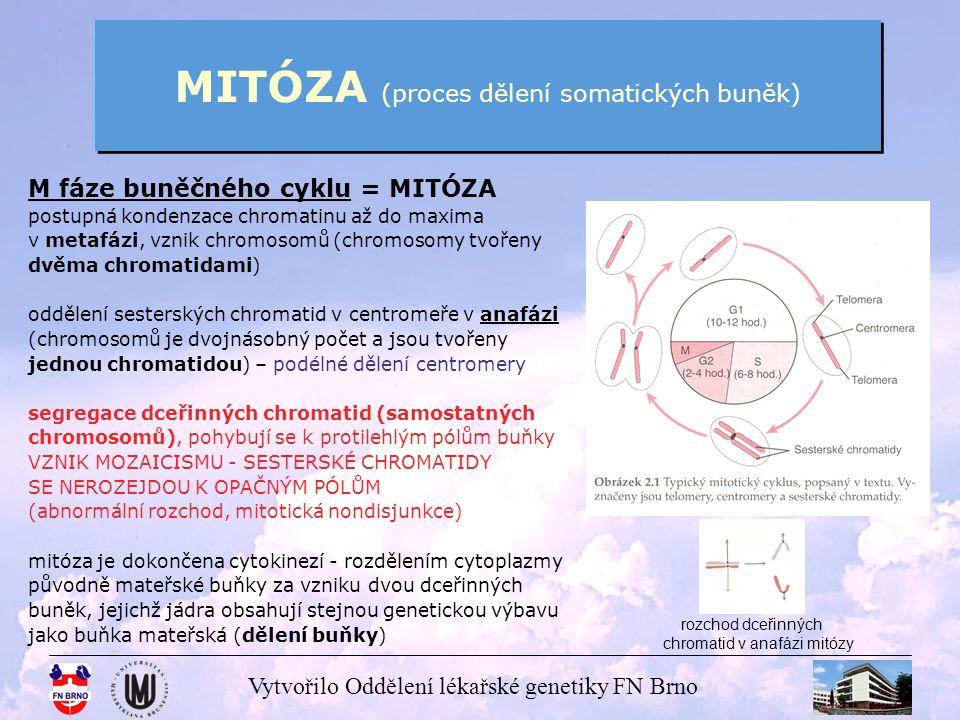 MITÓZA (proces dělení somatických buněk)