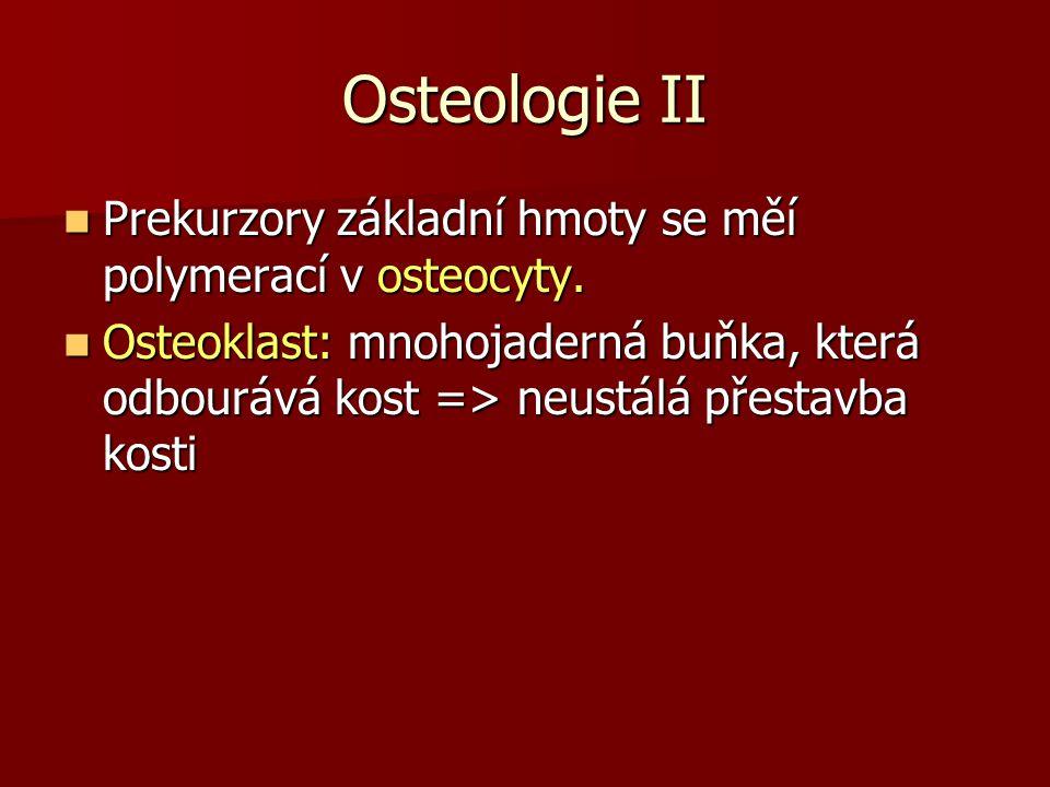 Osteologie II Prekurzory základní hmoty se měí polymerací v osteocyty.