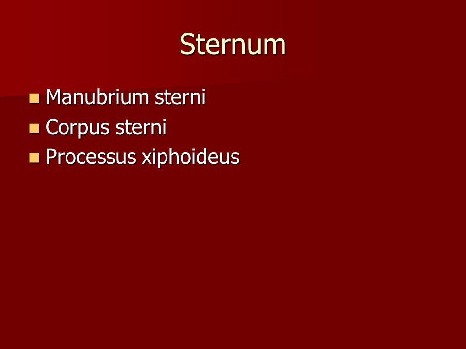 Sternum Manubrium sterni Corpus sterni Processus xiphoideus