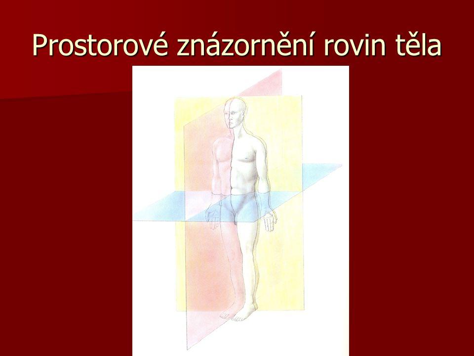 Prostorové znázornění rovin těla