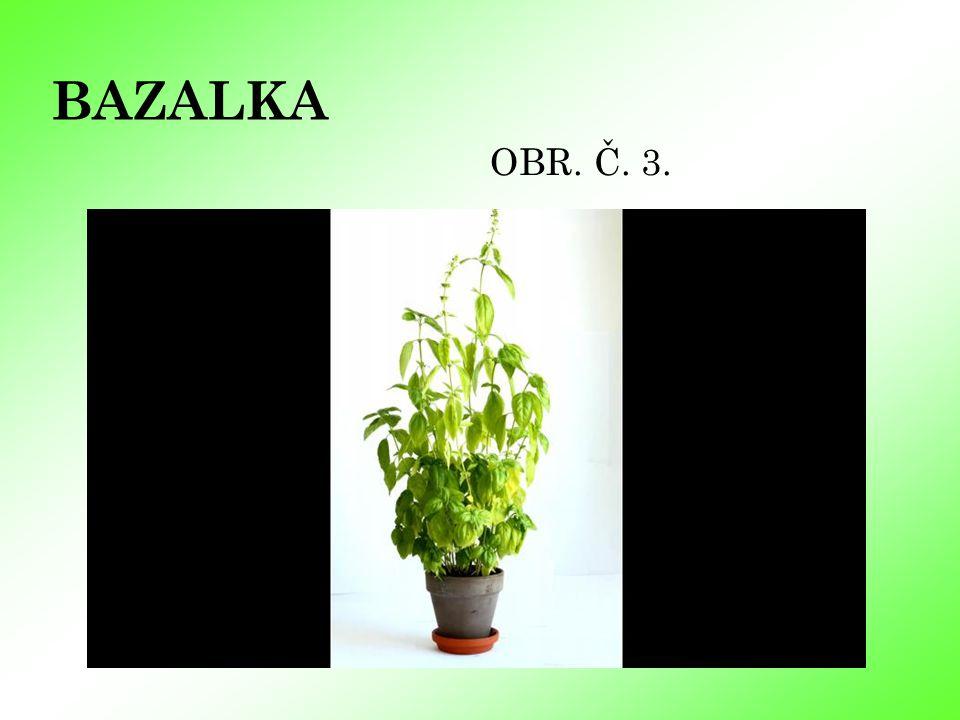 BAZALKA OBR. Č. 3.