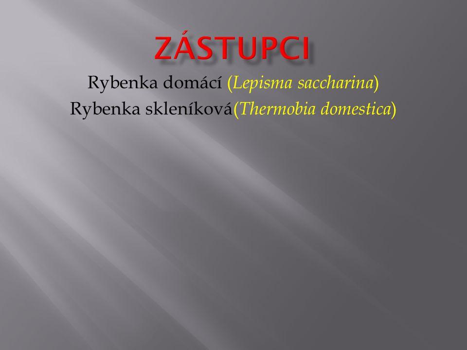 zástupci Rybenka domácí (Lepisma saccharina)