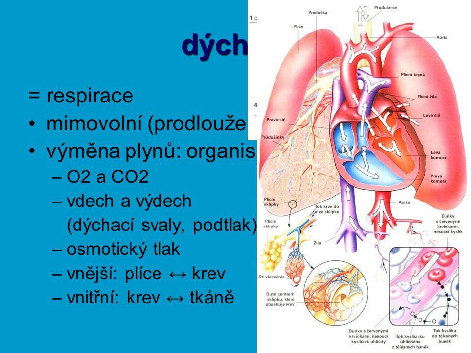 dýchání = respirace mimovolní (prodloužená mícha)