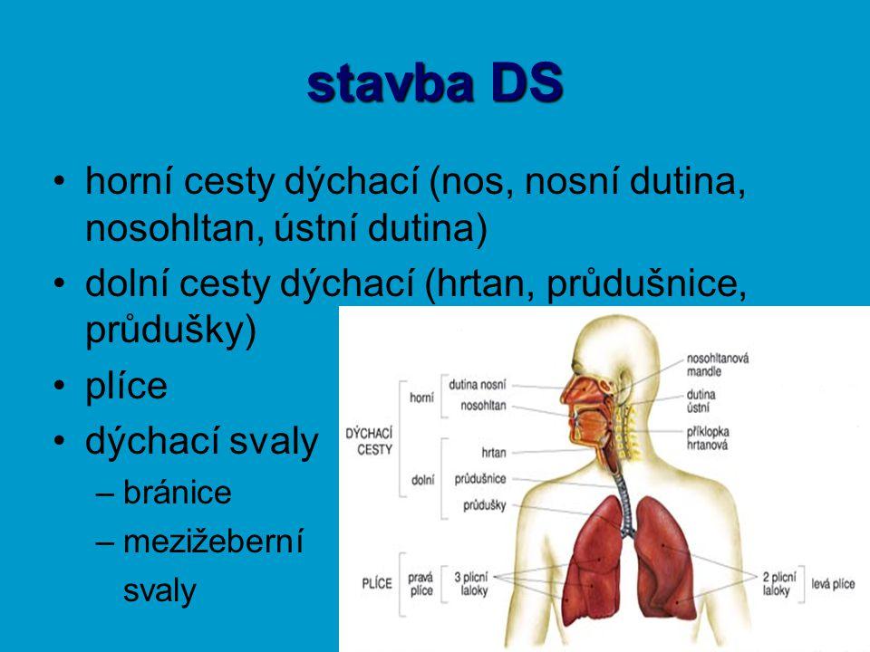 stavba DS horní cesty dýchací (nos, nosní dutina, nosohltan, ústní dutina) dolní cesty dýchací (hrtan, průdušnice, průdušky)