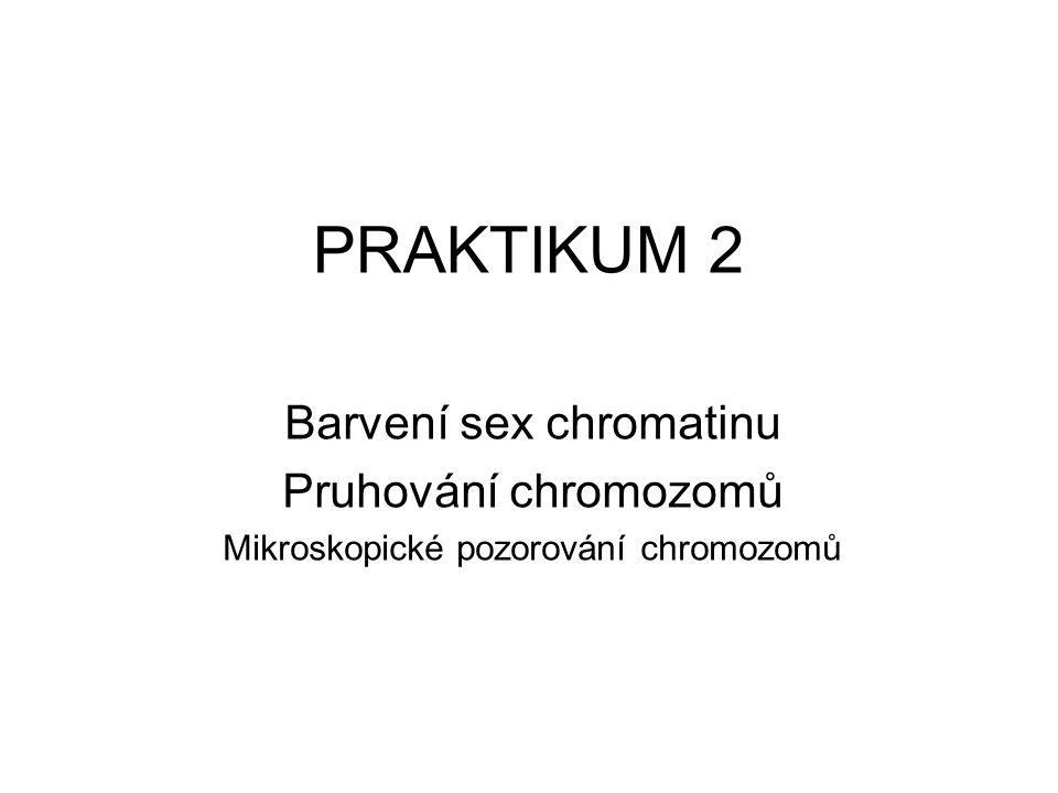 PRAKTIKUM 2 Barvení sex chromatinu Pruhování chromozomů