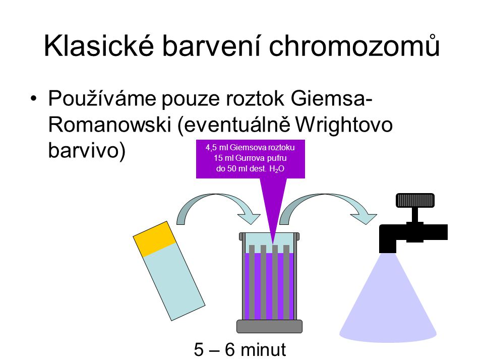 Klasické barvení chromozomů