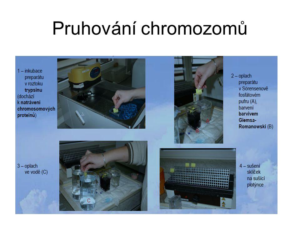 Pruhování chromozomů